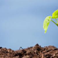 Firma Bosch pomaga w ochronie środowiska